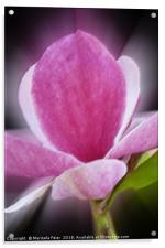 pink magnolia flower, Acrylic Print