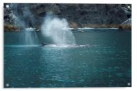 Humpback Whales Spouting, Acrylic Print