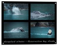 Humpback Whales Collage, Acrylic Print