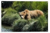 Munching Grass by the Stream, Acrylic Print