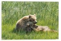 I Got Your Back - Bear Cubs, No. 4, Acrylic Print