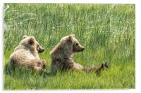 Unbearably Cute - Bear Cubs, No. 5, Acrylic Print