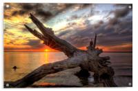 Driftwood Sunset, Acrylic Print