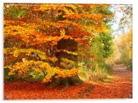Beech Woodland in Autumn, Acrylic Print