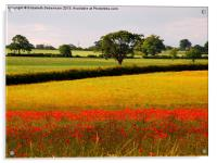 Red Poppies and Green Fields, Acrylic Print