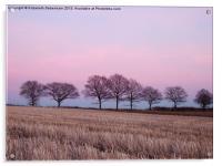 Pastel Treeline in February, Acrylic Print