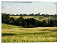 Summer Barley Fields, Acrylic Print