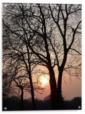 Tree Sihouettes at Dusk, Acrylic Print
