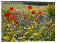 Summer Wild flowers with red poppies, blue cornflo, Acrylic Print