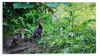 Ducklings , Acrylic Print