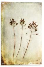 Dancing Trio, Acrylic Print