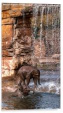 Elephants Water Fun, Acrylic Print