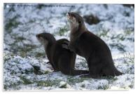 Otters In The Snow, Acrylic Print