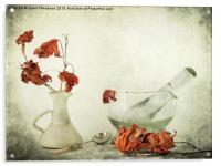 Red Maple, Acrylic Print