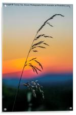 Standing Tall At Sunset, Acrylic Print