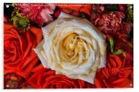 White Rose, Acrylic Print