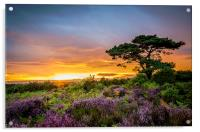 New Forest Sunset at Bratley View, Acrylic Print