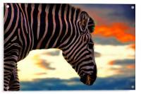 zebra at sunset, Acrylic Print