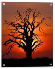 Sunset Tree, Acrylic Print