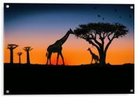 giraffes at sunset, Acrylic Print
