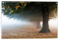 Autumn Mist, Acrylic Print