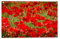 Field of Poppies, Acrylic Print