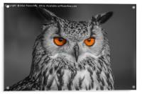 Bright Eyes, Acrylic Print