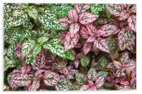Colorful Leafy Ground Cover, Acrylic Print