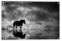 Horse, Acrylic Print