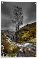 Lonely Tree, Acrylic Print