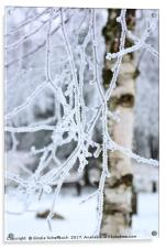 Hoar Frosted Birch, Acrylic Print