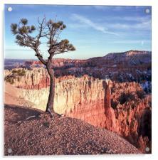 Lone Pine Tree, Acrylic Print