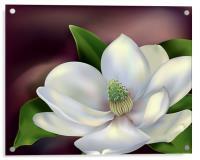 Magnolia Flower, Acrylic Print