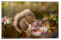 Red Squirrel, Acrylic Print