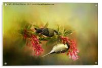 Great Tits on Flowers, Acrylic Print