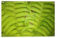 Swirled fern green foliage, Acrylic Print