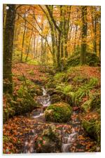 Fingle Woods, Acrylic Print