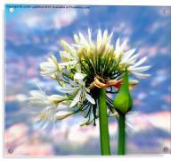 The Island of Flowers Madeira x3, Acrylic Print