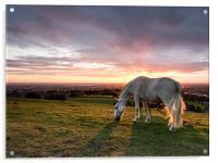 Sunset Horse, Acrylic Print