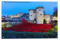 Poppy flowers at the Tower of London, Acrylic Print