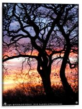 """Sunset tree silhouette"", Acrylic Print"