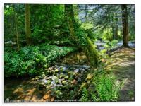 """Dappled sunshine at the stream"", Acrylic Print"