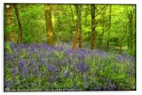 """""""Misty evening light in the bluebell wood"""", Acrylic Print"""