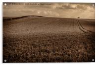 Sepia Undulating Field , Acrylic Print