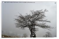 Iced tree on a misty day,, Acrylic Print