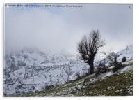 On a snowy day,, Acrylic Print