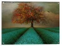 The Autumn tree , Acrylic Print