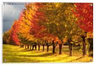 All the Autumn colors, Acrylic Print