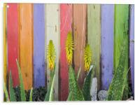 Walking around Penstraat street   Curacao views , Acrylic Print