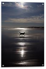 Dog on Beach, Acrylic Print